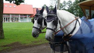 北海道旅行! 馬のテーマパーク ノーザンホースパークへ